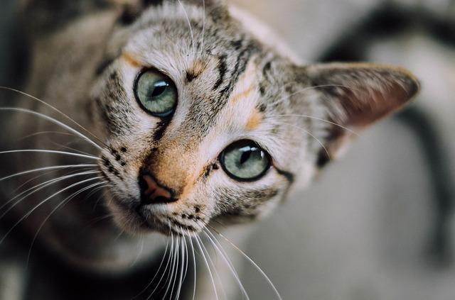 Túžite po mačke, no ste alergik? Ponúkame možné riešenie