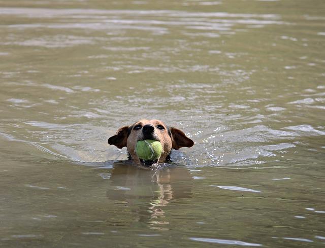 plavání psa